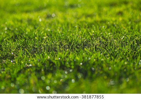 Green grass on a sunny meadow morning sparkling dew drops close up macro photo - stock photo