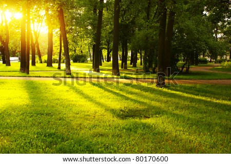 Green grass on a sunny meadow of a city park with tall trees around - stock photo