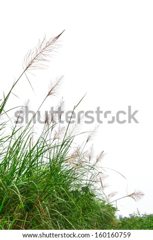 Green grass on a white background. - stock photo