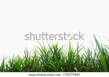 green grass on a white background, isolated - stock photo