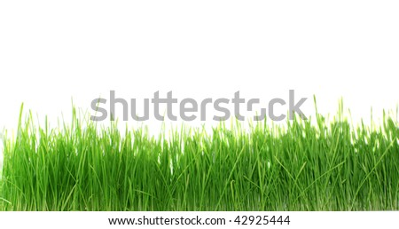 Green grass on a white background, it is isolated.