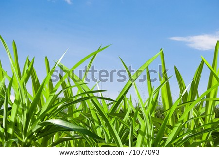 green grass on background blue sky - stock photo