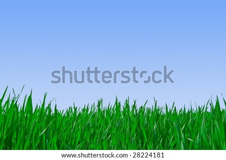 Green grass on blue sky as background - stock photo