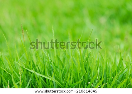 green grass on green background