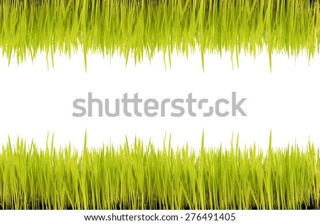 Green grass on isolated background - stock photo