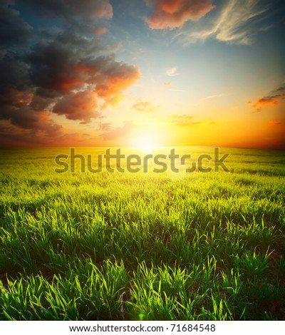 Green grass on meadow and sky with clouds. Focus on front grass - stock photo