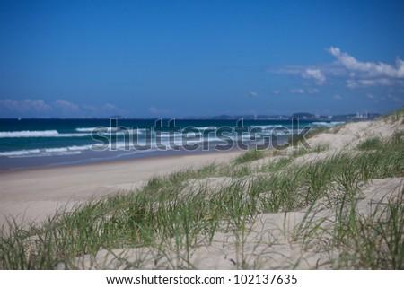 Green grass on sand dunes in Surfers Paradise, Gold Coast, Australia - stock photo