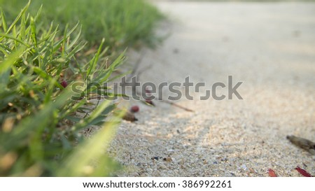 green grass on sand stone background - stock photo