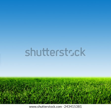 Green grass on spring field against blue clear sky. HD quality, perfect for background, nature theme etc. - stock photo