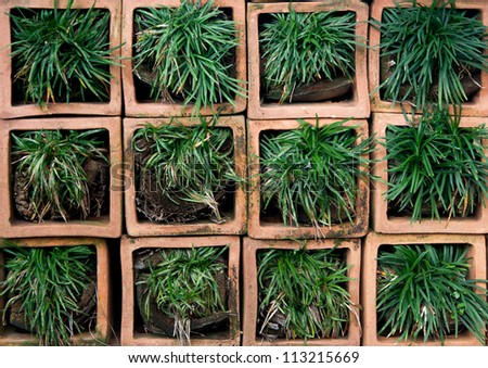 Green grass on square pot - stock photo