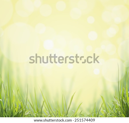Green Grass on sunny boken nature background - stock photo
