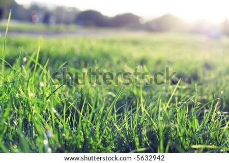 green grass on sunset - stock photo