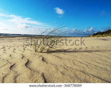 Green grass on the beach of the Baltic Sea