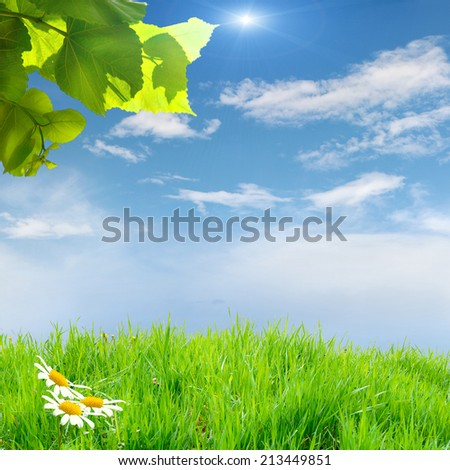green grass on the field with sky834 - stock photo