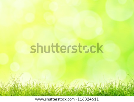 green grass on the green background