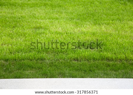 Green grass on the lawn. Selective focus. Shallow depth of field. - stock photo