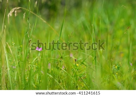 Green grass on the summer meadow - stock photo