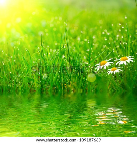 green grass on the water - stock photo