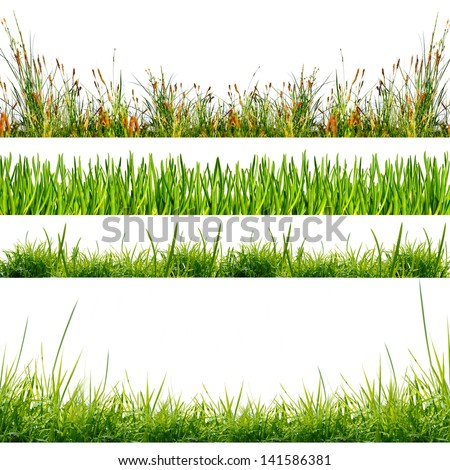 green grass on the white background - stock photo