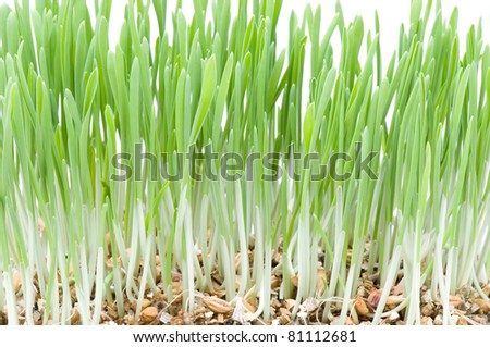 green grass on white - stock photo