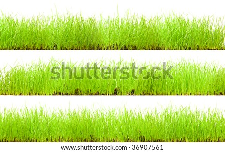 green grass on white background - stock photo