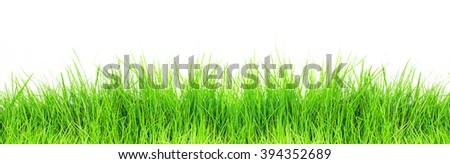 Green grass on white background - stock photo