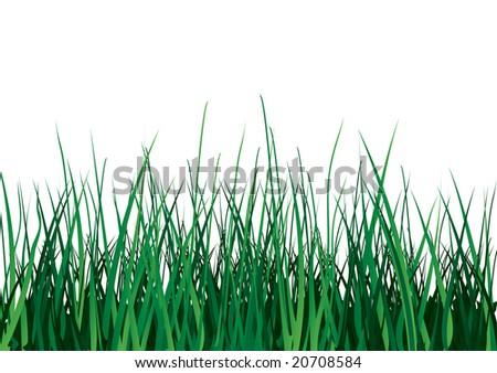 Green grass on white background. Raster illustration. Isolated. - stock photo
