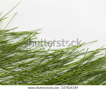 Green grass on white background with place for a text