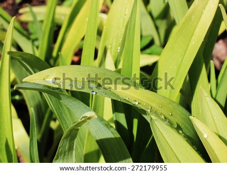 Green grass or Green nature background, Spring background - stock photo