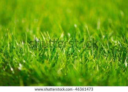 Green grass outdoor in the park