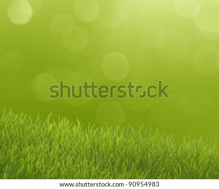 Green grass over the sunny background with highlights