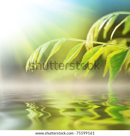 Green grass over water on sunny day. - stock photo