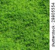 Green grass seamless background. (See more seamless backgrounds in my portfolio). - stock photo