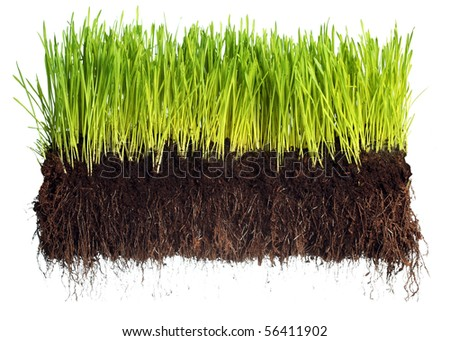 Green grass showing roots - stock photo