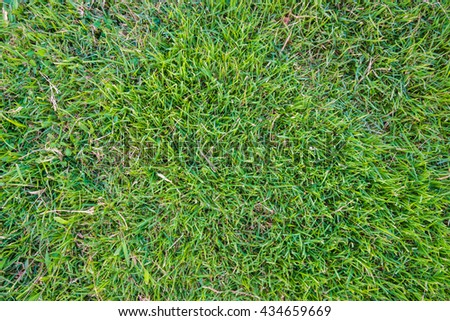 Green grass soccer field background nature object - stock photo