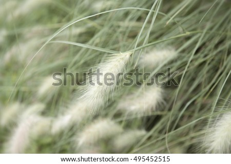 Green grass soft focus macro photo, beautiful nature background.