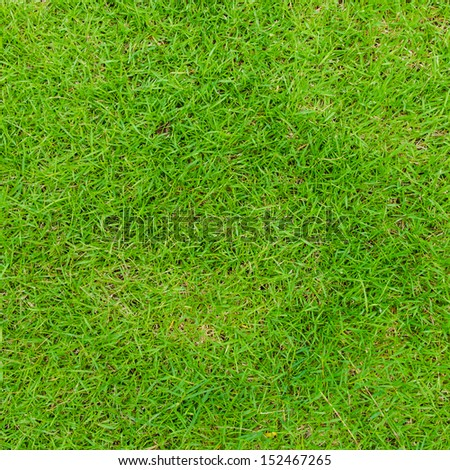 Green grass texture background. - stock photo