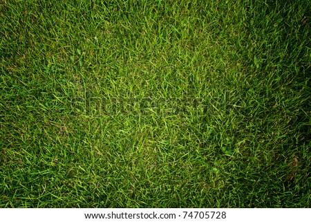 Green grass texture background. - stock photo