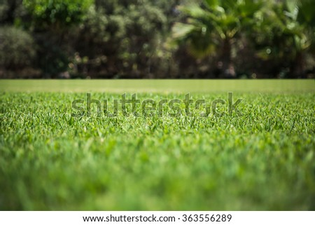 Green grass texture from a field. Natural backgrounds with beauty bokeh - stock photo
