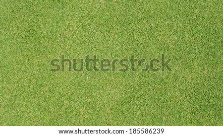 Green Grass texture,golf course - stock photo
