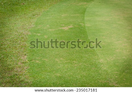 Green Grass texture,golf course - stock photo