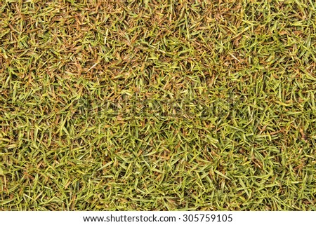 Green grass texture Golf Course For background and design - stock photo