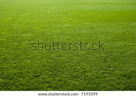 Green grass texture of a soccer field.