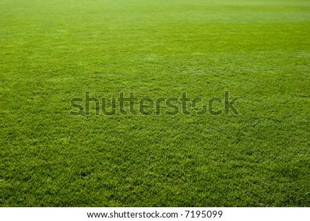 Green grass texture of a soccer field. - stock photo