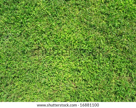 Green grass texture on a sunny day. - stock photo