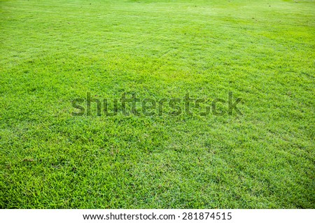 green grass texture or background. - stock photo