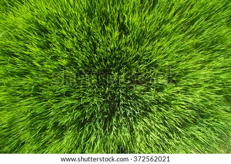 Green grass texture photo taken from above - stock photo