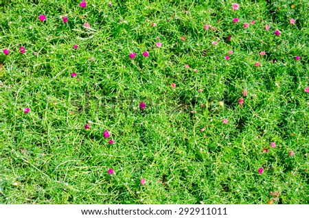 Green grass texture with pink flowers