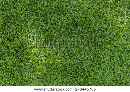 Green grass texture you can use for your projects - stock photo