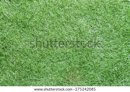 Green grass textures background - stock photo